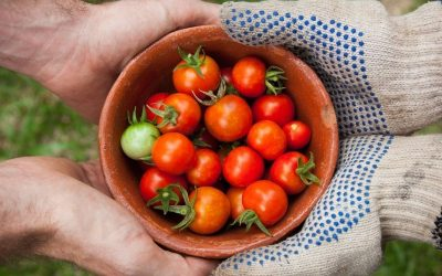 What is Environmentally Friendly Eating?